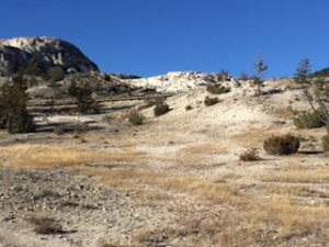 Picture of Mammoth Hot Springs