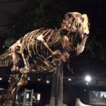 Pic of Dinosaur