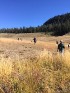 Picture of McLaren Tailings reclamation site in Yellowstone Park.